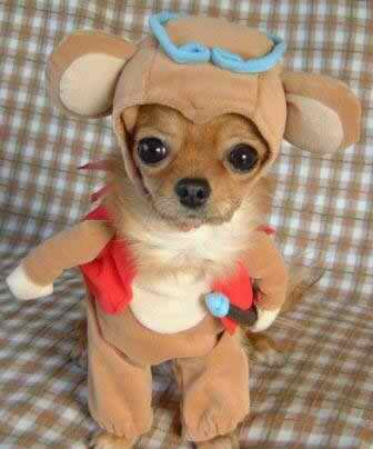 funny dog in clothes 2